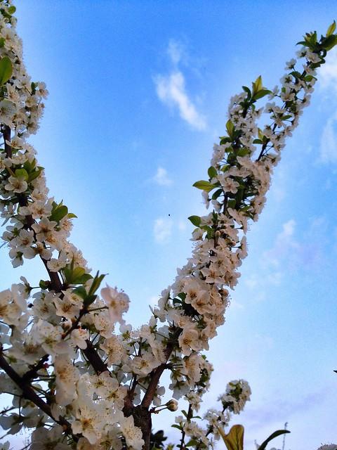 Primavera en invierno