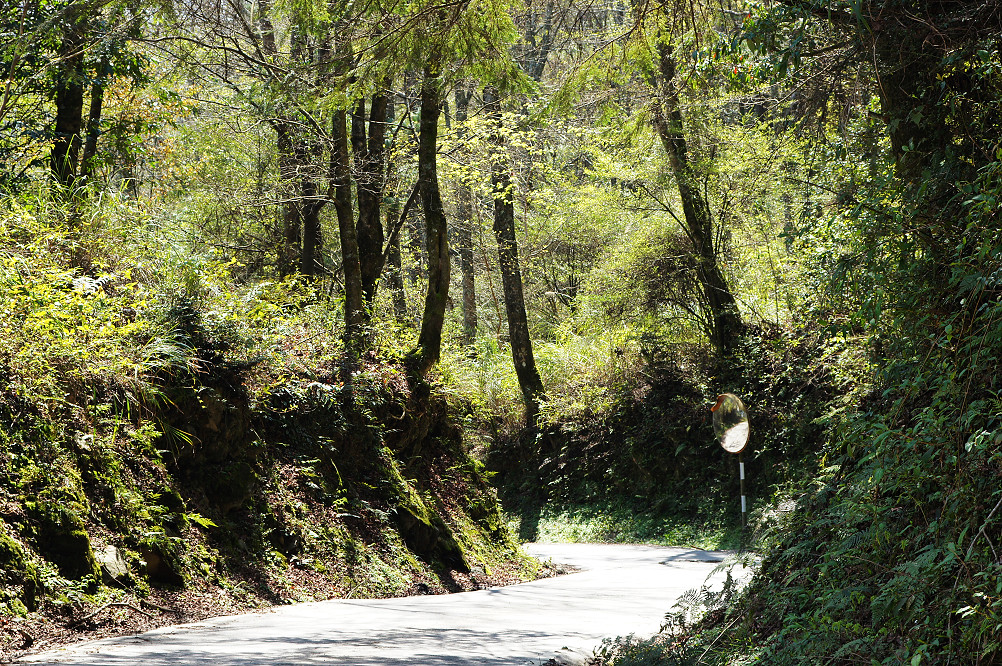 觀霧巨木步道-016