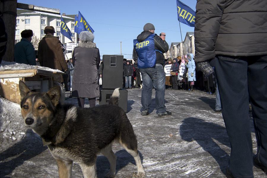 Собака на митинге