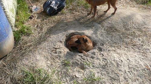 Cão descansando no Jardim dos Amiguinhos