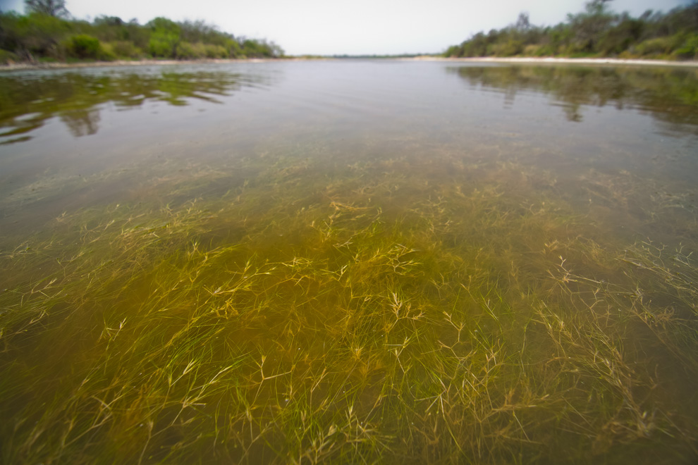 . El suelo de las lagunas también contiene una vegetación rica que sirve de alimento a las aves y a los microorganismos que en ella habitan. (Tetsu Espósito)
