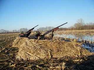 hunting ducks, shotguns
