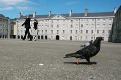 The Pigeon Club