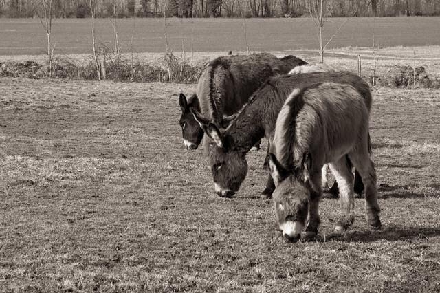 Donkeys V