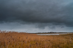 Storm clouds over the reed beds