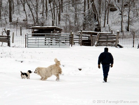 Snow dogs 7 - FarmgirlFare.com