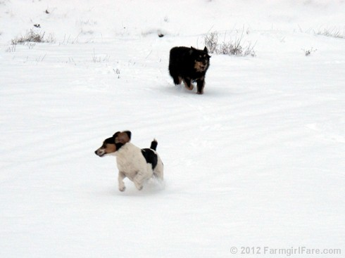 Snow dogs 8 - FarmgirlFare.com