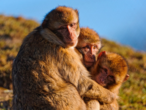 [フリー画像素材] 動物 1, 猿・サル, 動物 - 親子 ID:201202291000