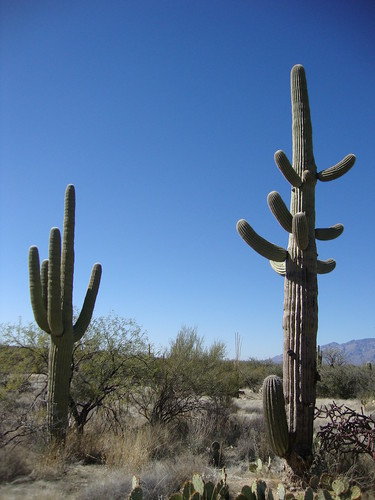 Saguaro National Park East, Loma Verde Loop