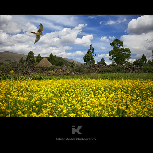 trip travel flowers summer sky mountains bird peru yellow machu picchu inca cuzco clouds rural landscape highlands tour village south meadow andes canola peruvian puno raqchi incan countywide templeofwiracocha