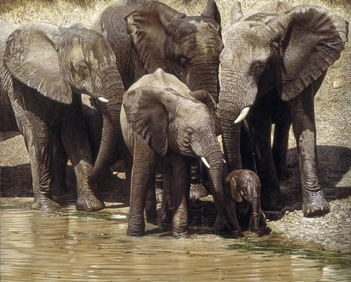 """'Elephants' oil on board 20"""" x 37"""""""