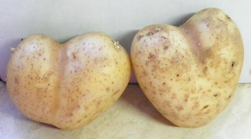Neobično  voće i povrće  6965369519_e5bcda3d4d