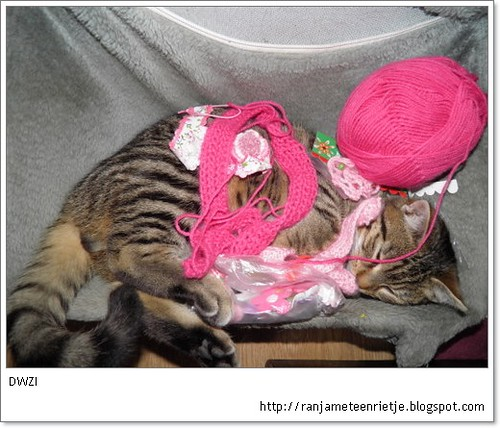 kat met haakwerk