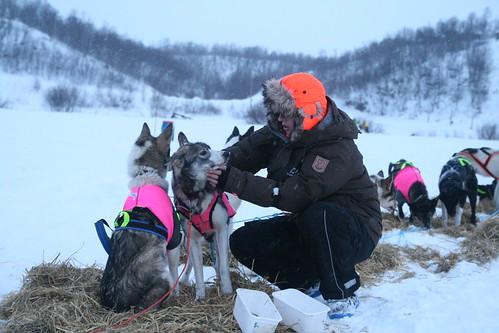 Veterinær sjekker lederhunden Helly.