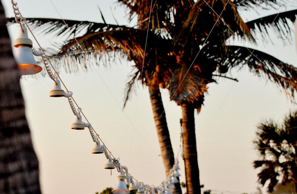lamparas-palmeras