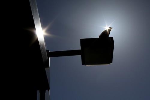 light shadow sky sun canada colour bird topf25 animal brooklyn photo flickr novascotia gasstation newport crow canondslr 2012 digitalimage hantscounty urbanpoetry contemporarylandscape sociallandscape mar12 tumblr topf25faves icollectlight canoneos60d avardwoolaver avardwoolaverphoto startcafe2012
