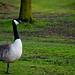 Swan. by leolumix