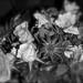 La BELGIQUE en deuil.Belgium in mourning.HOMMAGE aux 28 victimes** by Baratineuse1947**Lucie **
