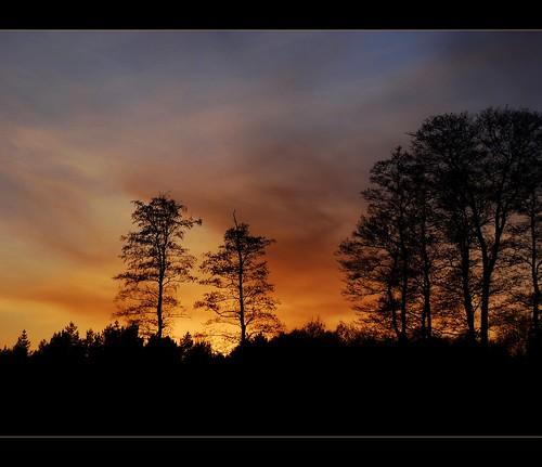 trees sunset sky nature river spring colours poland polska natura wiosna przyroda kolory rzeka niebo zachódsłońca drzewa grabia sonydschx100v flickrstruereflection1 rememberthatmomentlevel1 rememberthatmomentlevel2 rememberthatmomentlevel3