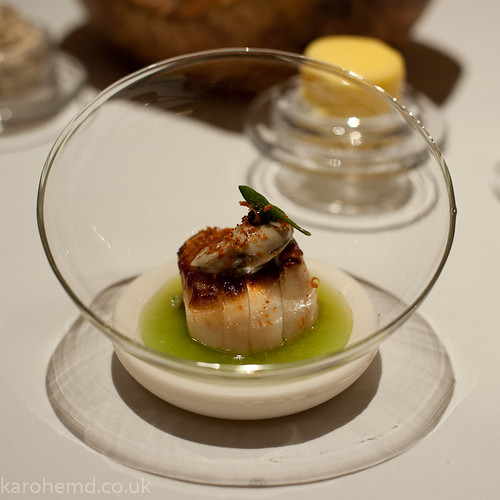 Scallop, oyster