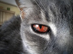 Mistigri's red eye