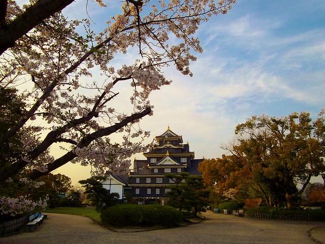 岡山城のさくら