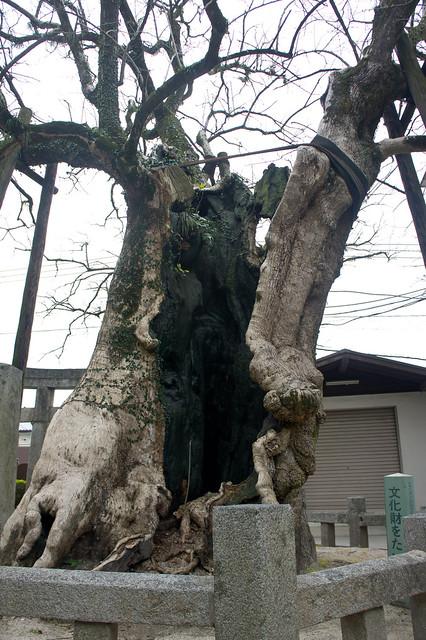 2012-kyushu-641