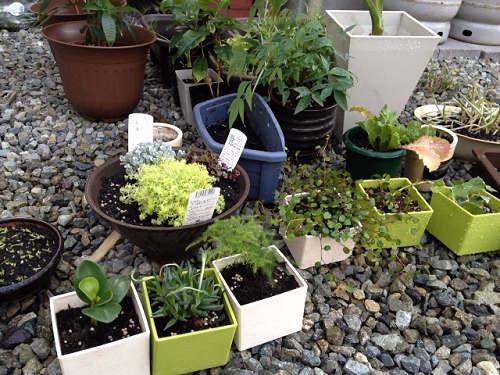 観葉植物の植え替え-05