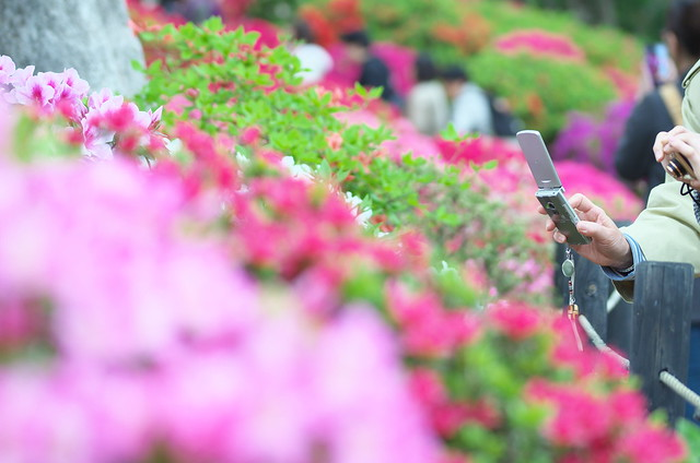 東京路地裏散歩 根津神社つつじまつり 2014年4月20日