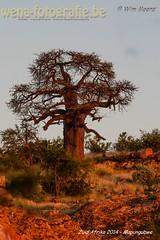 2014 Mapungubwe-43