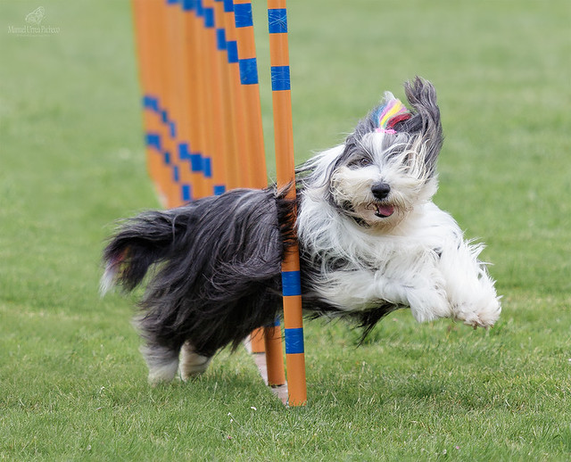 Agility Is Fun