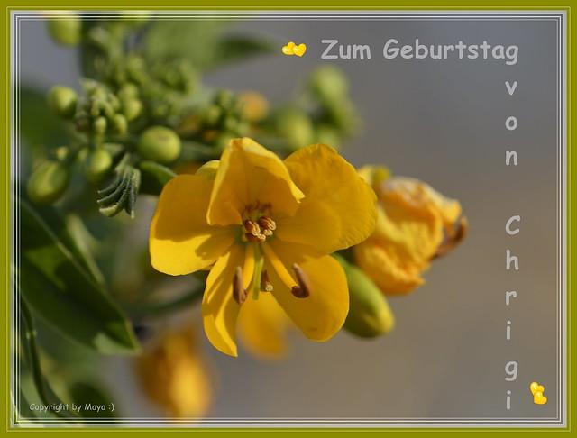 Geburtstagskarte für Chrigi  * Birthday card for Chrigi  * Tarjeta de cumpleaños por Chrigi  *   .  _DSC3200