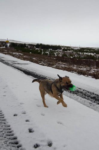 Bella sprinting