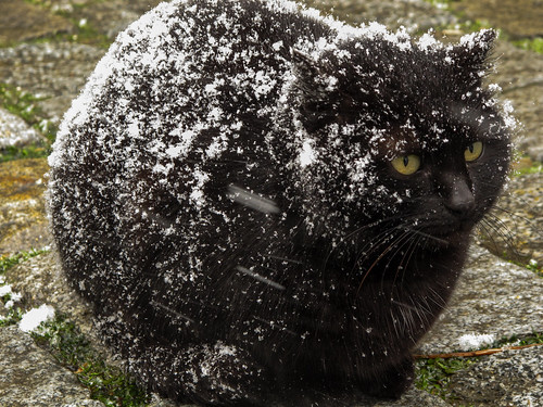 Cat in the Snow by virtualwayfarer