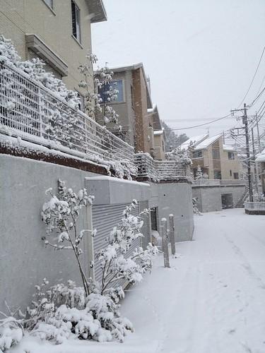 2/29 積雪