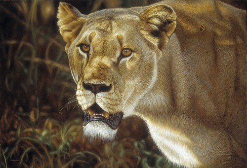 'Predators Gaze' oil on board""