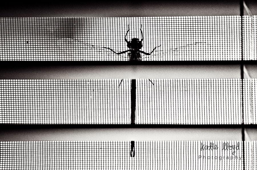 dragonfly-bw