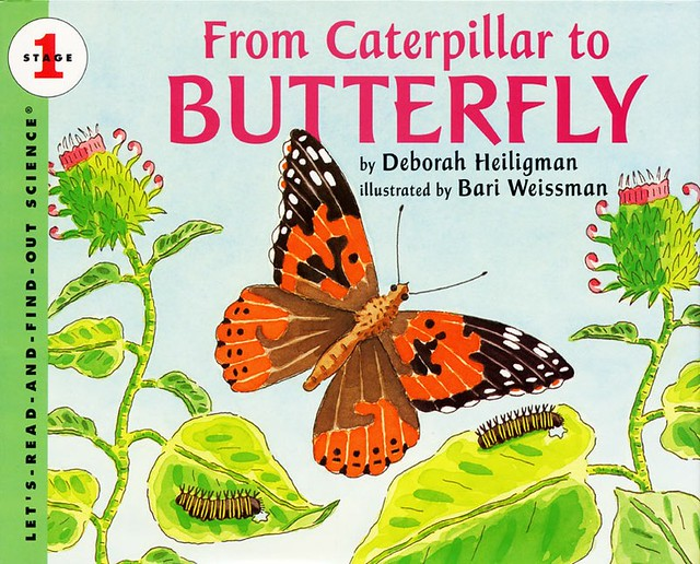 Kat-Caterpillar to Butterfly