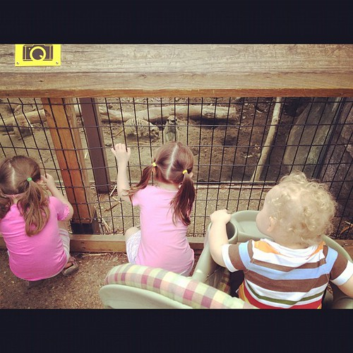 They loved the meerkats!