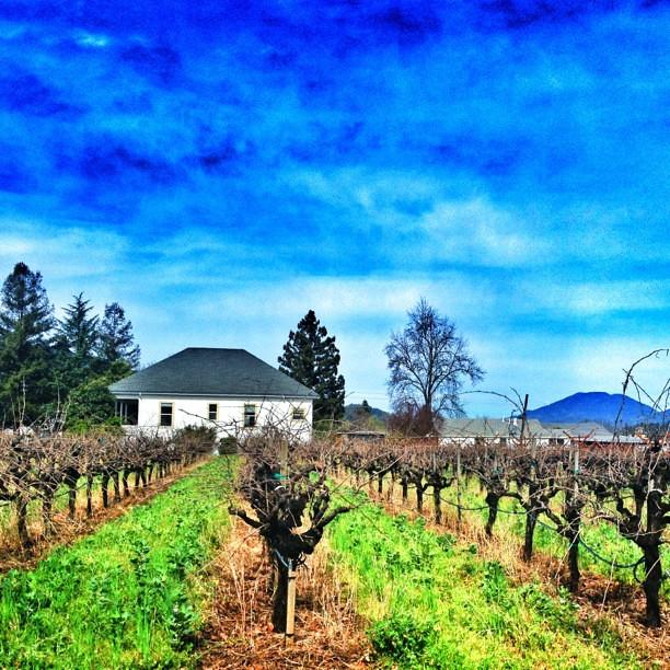 st helena home vineyards and mtsthelena napavalley