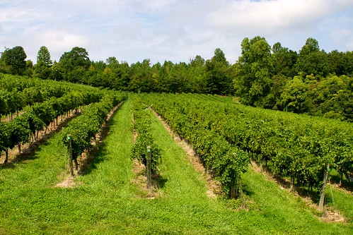 trees virginia vineyard vines view wine scenic winery va grapes chestergap chestergapcellars