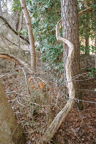 statepark park wood tree woods vine delaware laurel laurelde trappondstatepark sussexcountyde