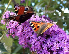 """""""The butterfly is a flying flower."""""""