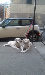 Daily Deli Dogs 23 March 2012 | by epc