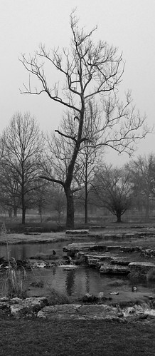 Tree in Fog by Creek