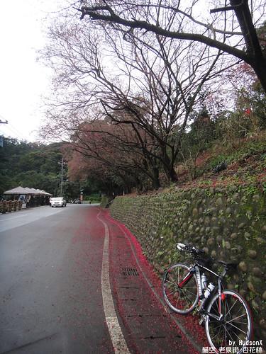 杏花林的櫻花道