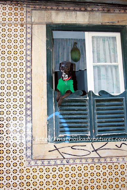 foto cane mascotte Lisbona