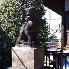 狛犬探訪 馬込の熊野神社 もう写真撮らせて頂いてると思い込んでた