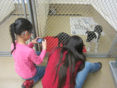 Girls Enjoying the Puppies