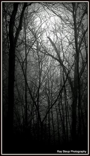 trees blackandwhite monochrome fog indiana canong12 canonpowershotg12